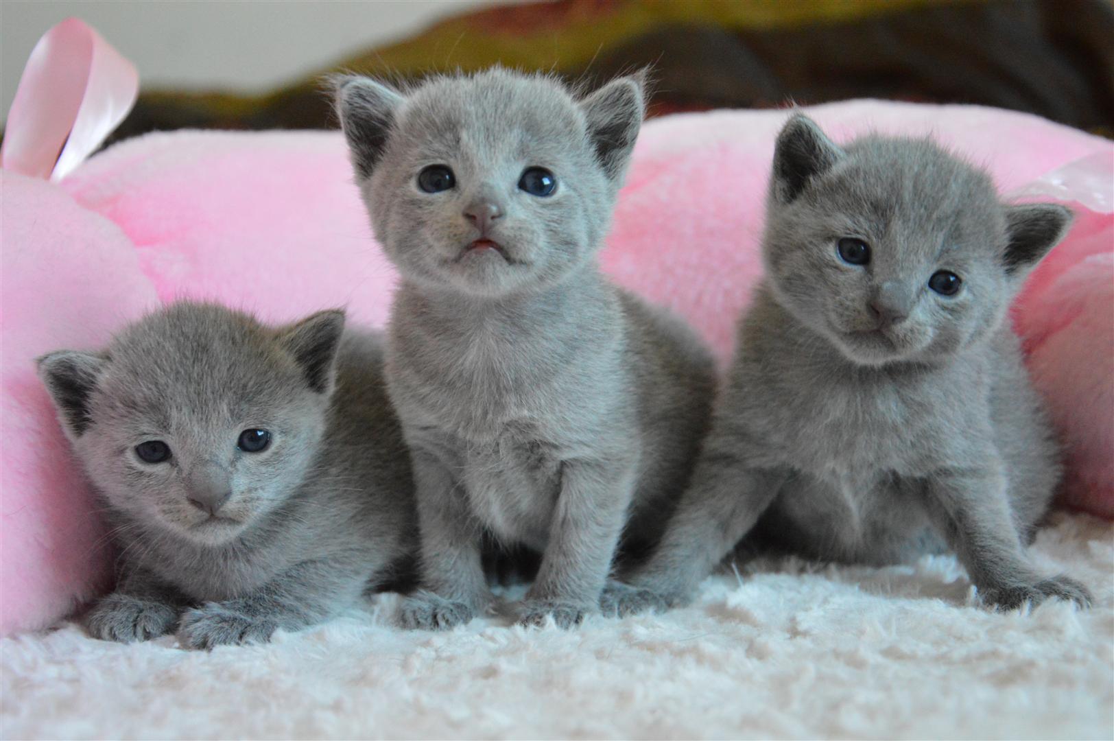 kocięta/kittens