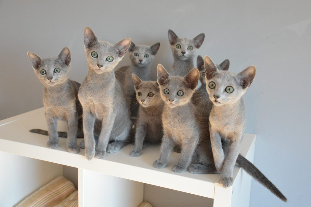 Nasze Kociaki w nowych domach/our kitten in new homes
